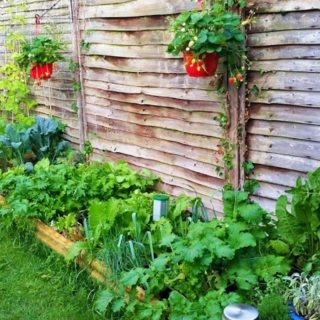 Expanding a Vegetable Patch