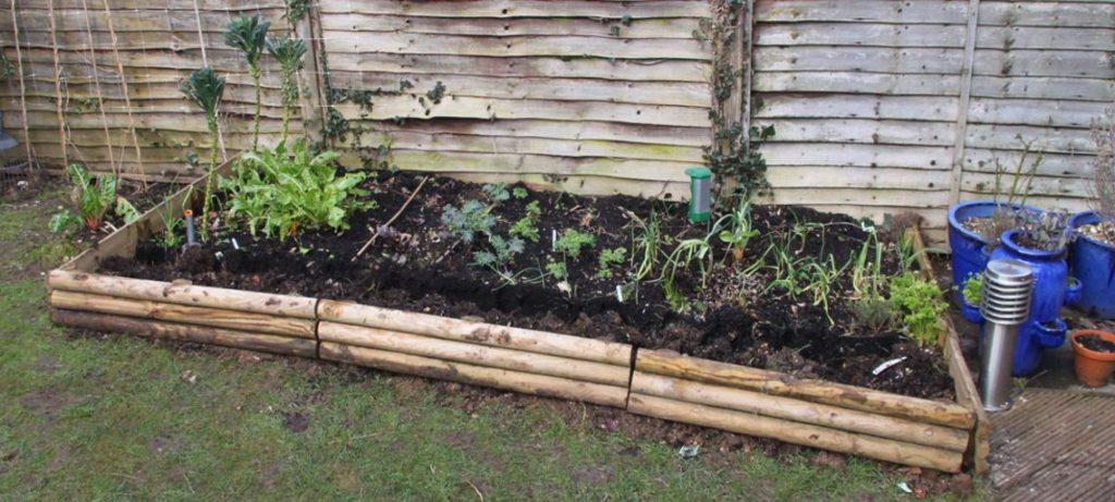 veg patch expansion 002