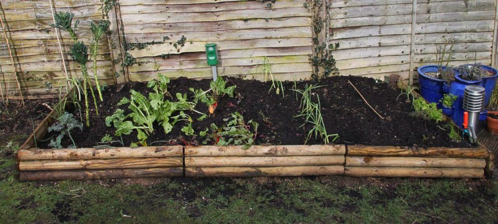 Planning a Vegetable Patch