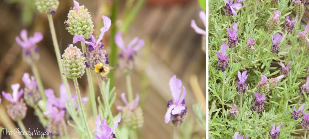 How to Get Bumblebees and Bees Into Your Garden