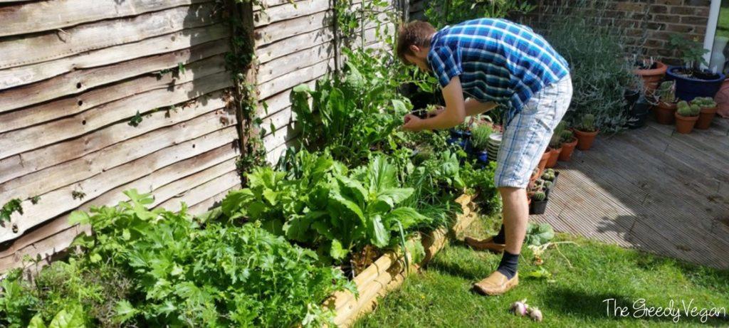 garden makeover 008