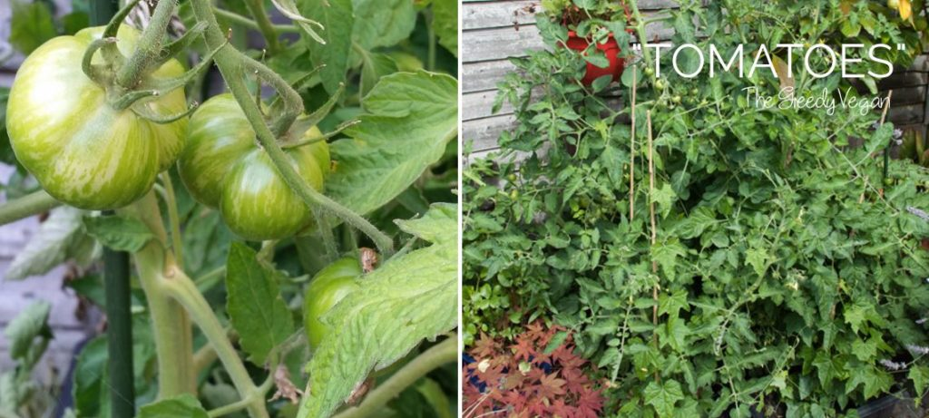Late Summer Garden Update