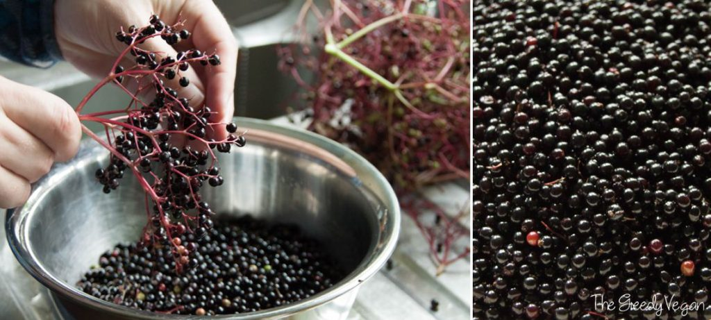 2015 August Spotting and Picking Elderberries 001