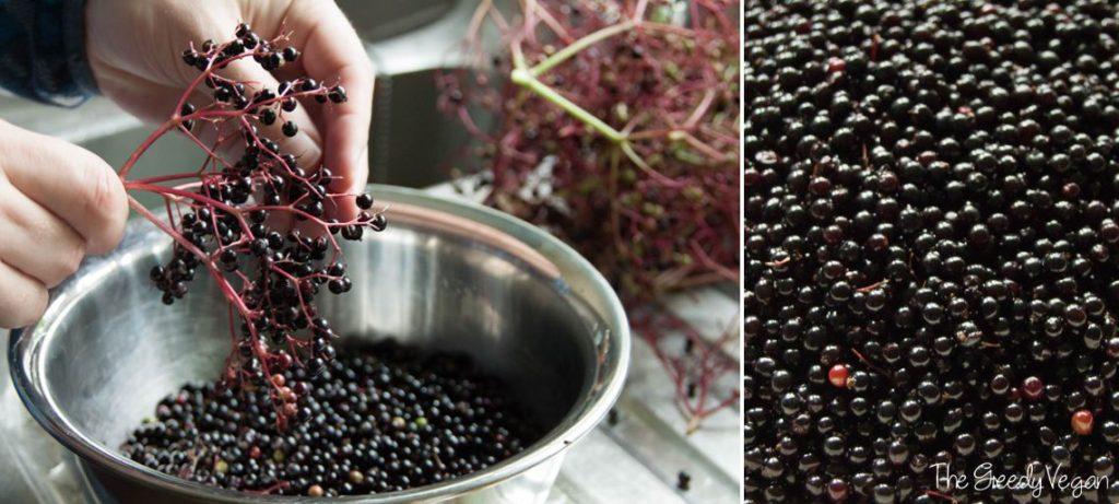 2015 August Spotting and Picking Elderberries 001