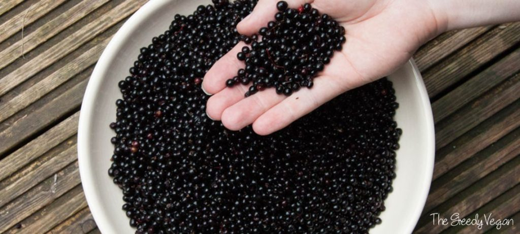 2015 August Spotting and Picking Elderberries 006