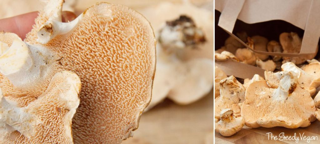 How to identify and pick hedgehog mushrooms