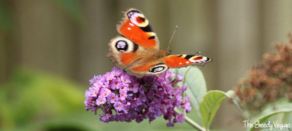 Top 10 Bee Friendly Flowers