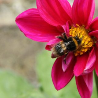 Top 10 Bee Friendly Flowers