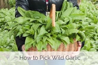 Wild Garlic Quiche