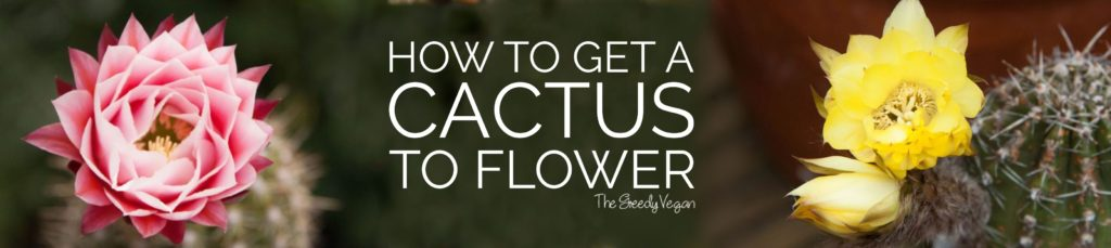 how to grow cacti