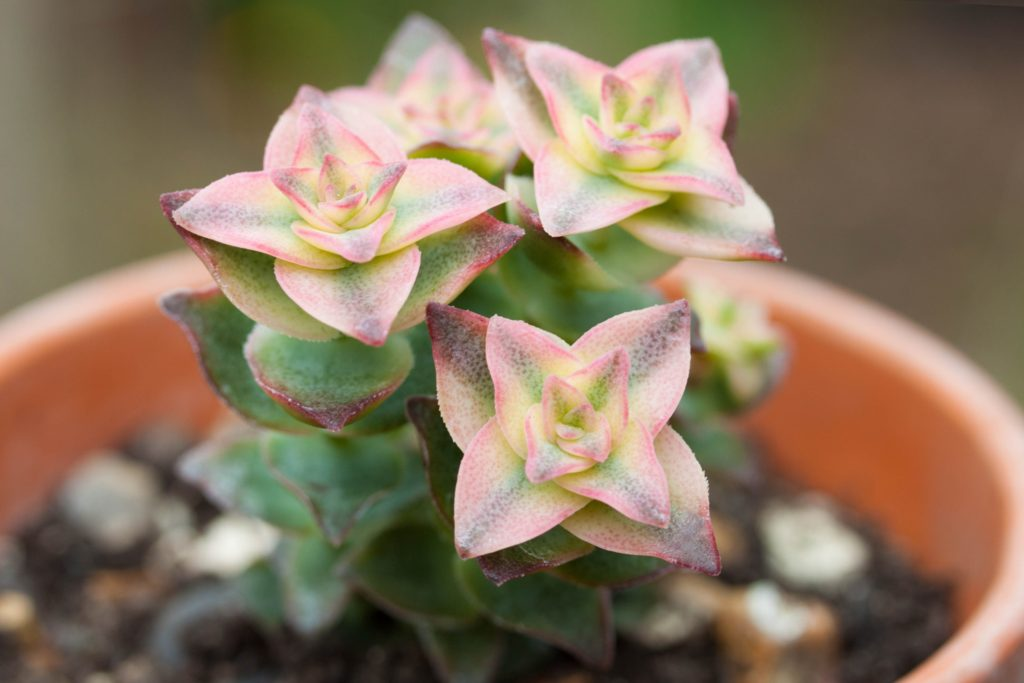 How To Grow Succulents From Seed The Greedy Vegan