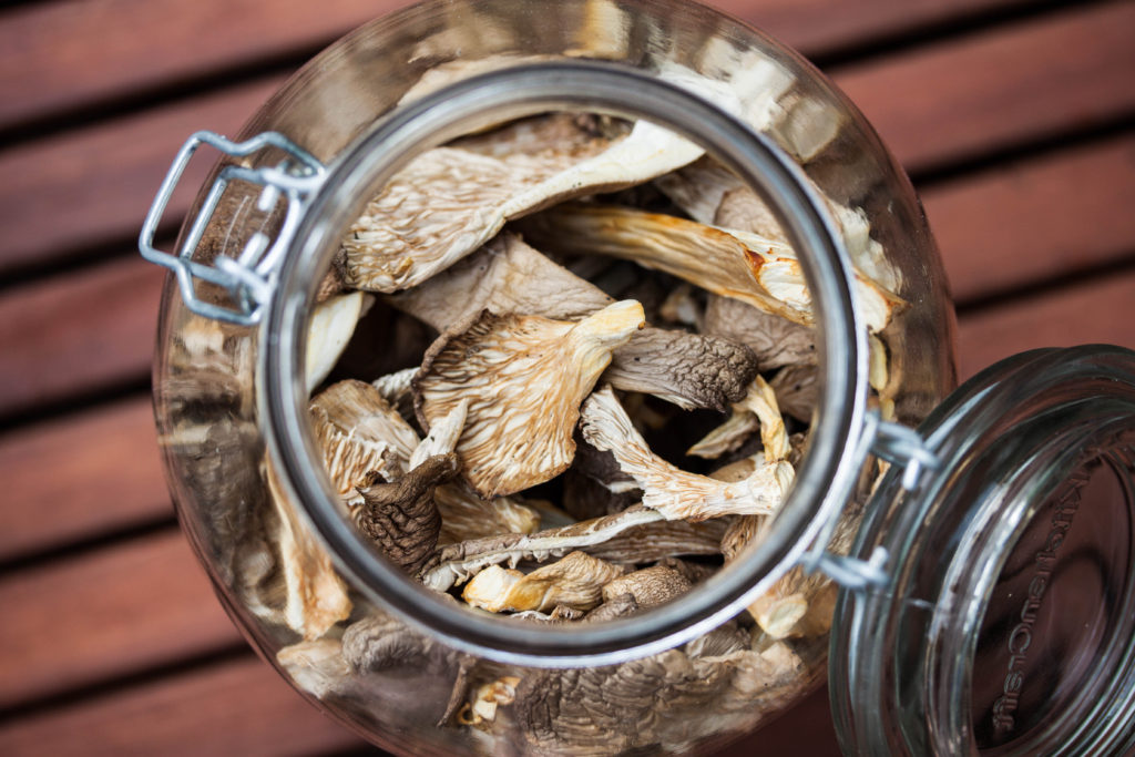 How to Identify and Pick Oyster Mushrooms